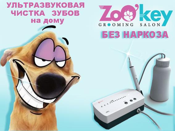 чистка зубов ультразвуком, снятие зубного камня у собак